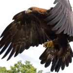 Why do eagles fly alone?