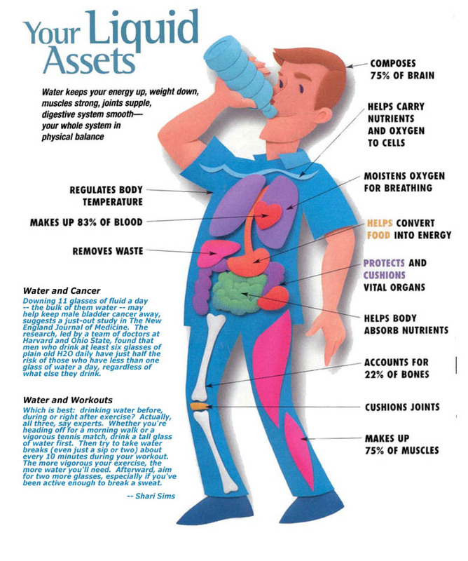 Why is Water Important for the Body?