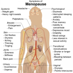 Can You Get Pregnant During Menopause?