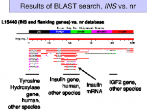 Difference between BLAST and FASTA