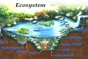 Difference Between Ecology and Ecosystem-1