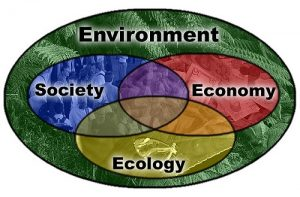 Difference Between Ecology and Ecosystem