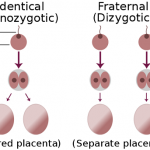Difference between Monozygotic and Dizygotic Twins