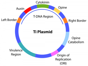 Differences Between Cosmid and Plasmid