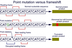 Difference between Point Mutation and Frameshift Mutation