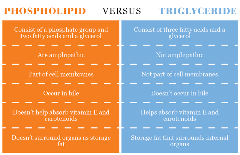 PHOSPHOLIPID VERSUS TRIGLYCERIDE