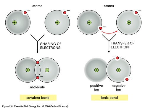 Similarities Between Ionic Bonds and Covalent Bonds
