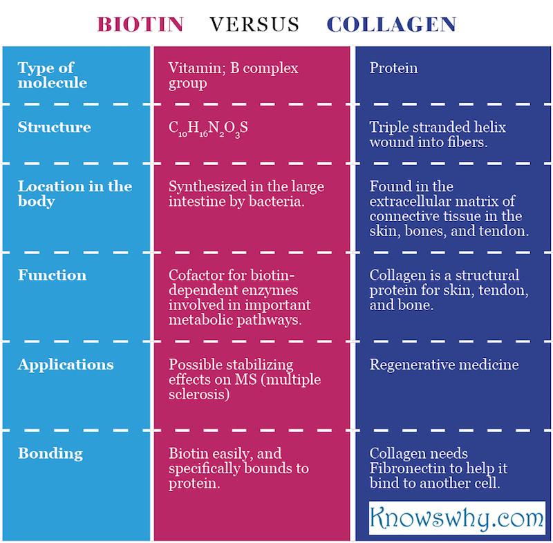 Biotin VERSUS Collagen