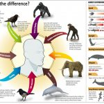 Similarities Between Humans and Animals